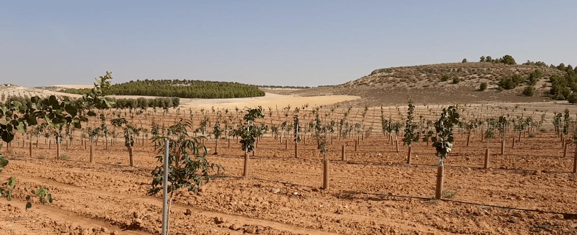 eOrchard Case Study optimize pistachio production