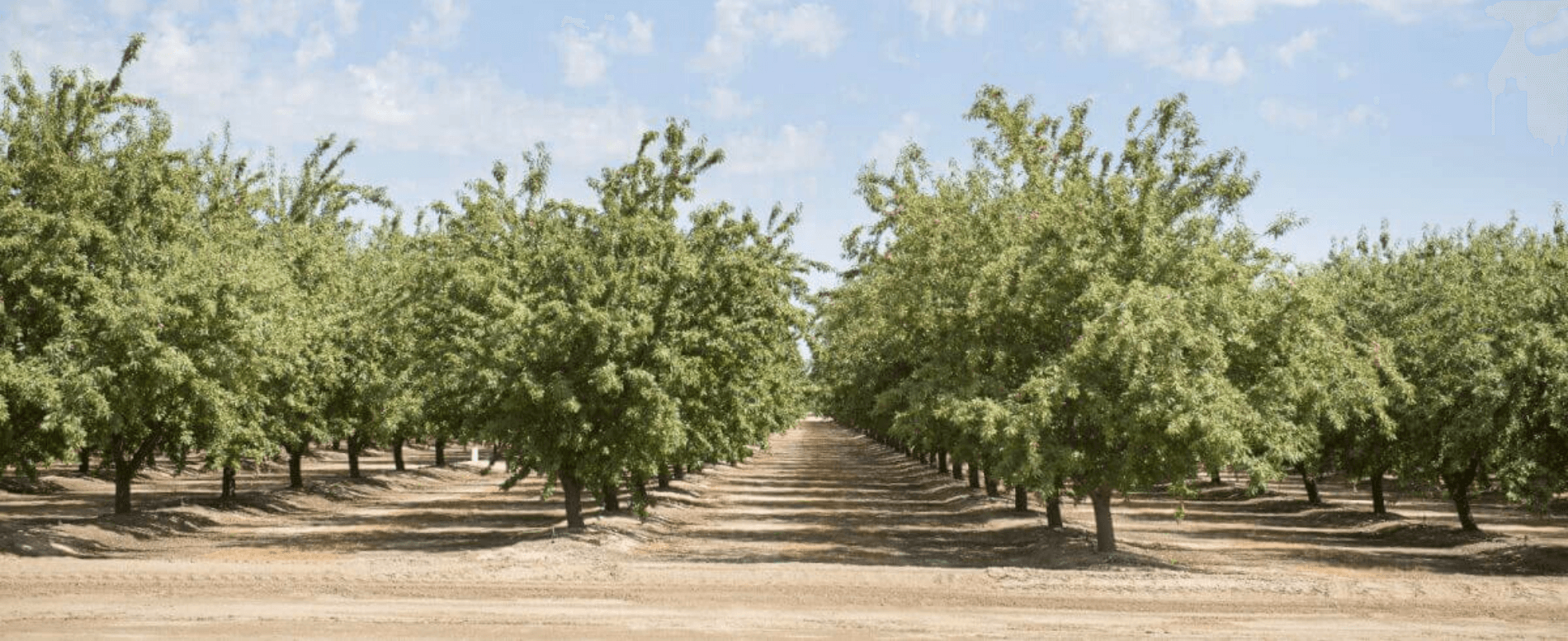 Schedule pistachio irrigation
